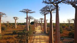 Find cheap flights from Johannesburg to Madagascar