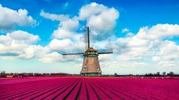 Find cheap flights from Johannesburg to the Netherlands