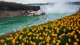 Niagara Falls hotels near Bird Kingdom